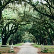 A tree archway in a Savannah, Georgia, park.