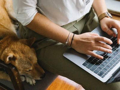 Person on laptop next to dog