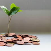 Plant growing from pile of pennies